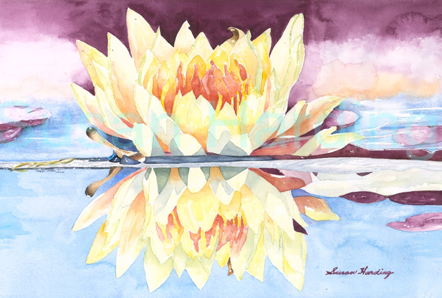 Water Lilly – Singular Reflection